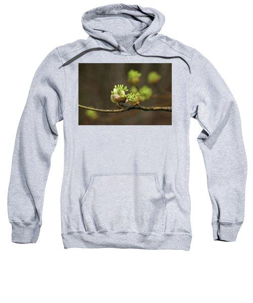Spring Buds 9365 H_2 Sweatshirt