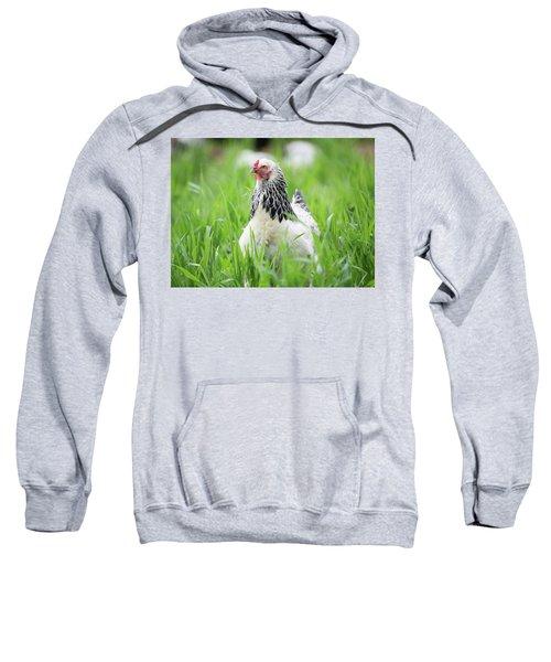 Spring Checken Sweatshirt