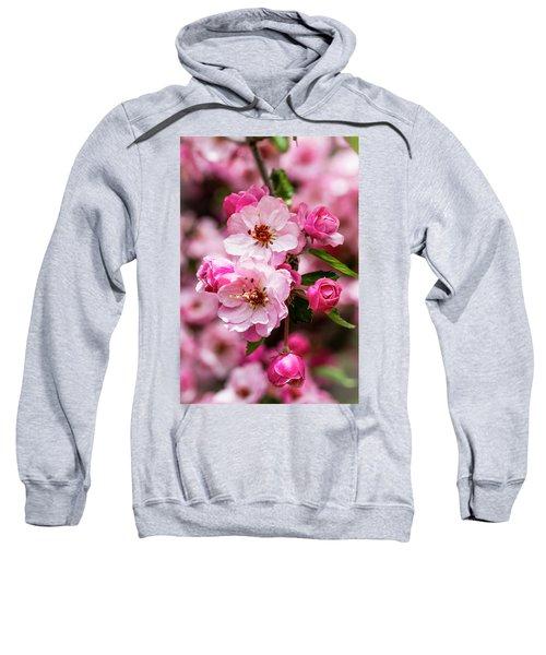 Spring Pink Sweatshirt