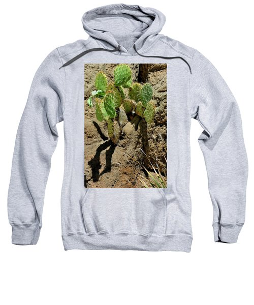 Spring Refreshment Sweatshirt