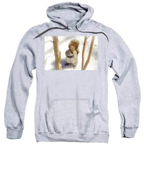 Squirrel In Snow Sweatshirt