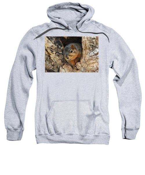 Squirrel Peaking Out Of The Hole Sweatshirt