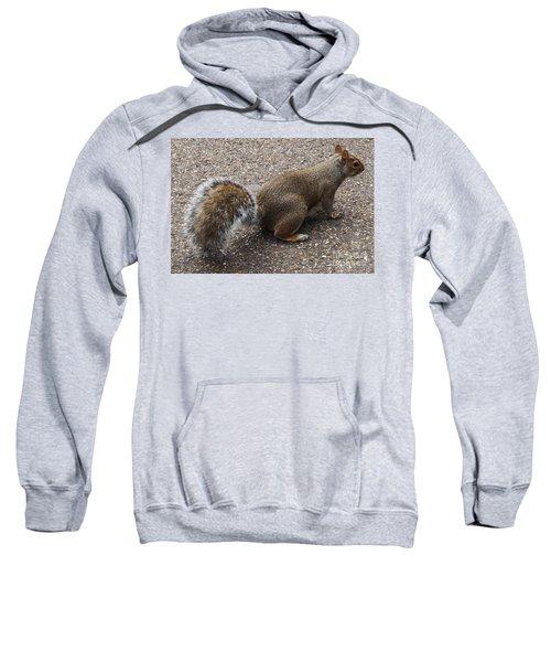 Squirrel Side Sweatshirt