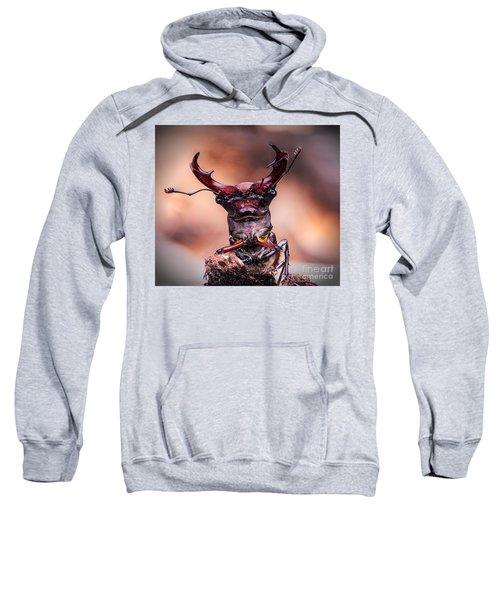 Stag Beetle Stare Down Sweatshirt