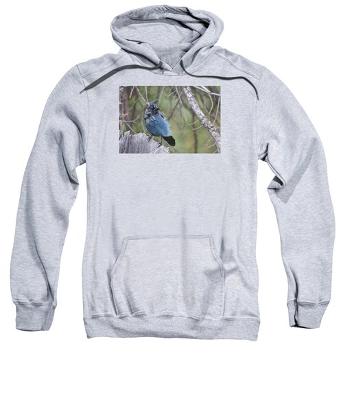 Sweatshirt featuring the photograph Stellar's Jay by Gary Lengyel