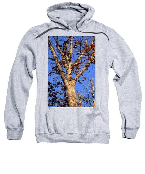 Stunning Tree Sweatshirt
