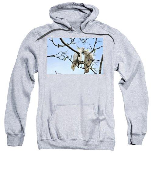 Sulphur Crested Cockatoos Sweatshirt