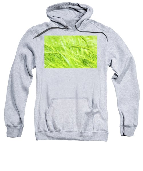 Summer Barley. Sweatshirt