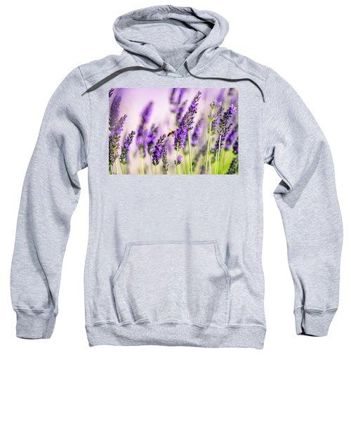 Summer Lavender  Sweatshirt