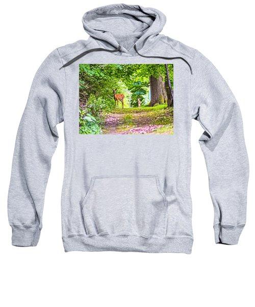 Summer Stroll Sweatshirt