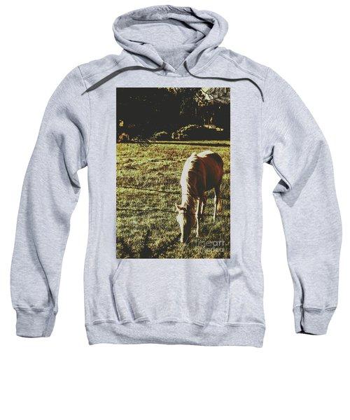 Sundown Horse Meadow Sweatshirt
