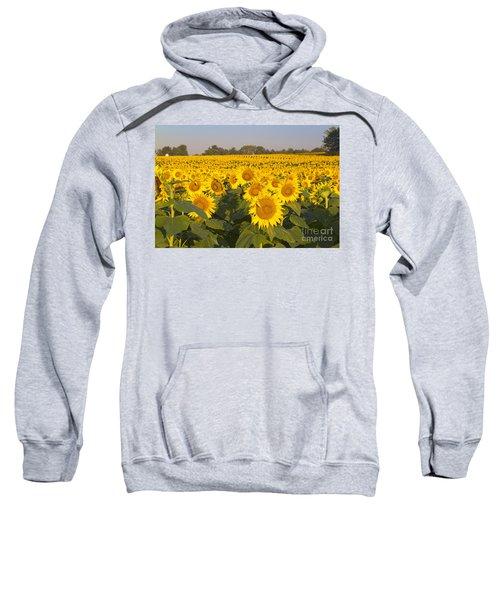 Sunshine Flower Field Sweatshirt
