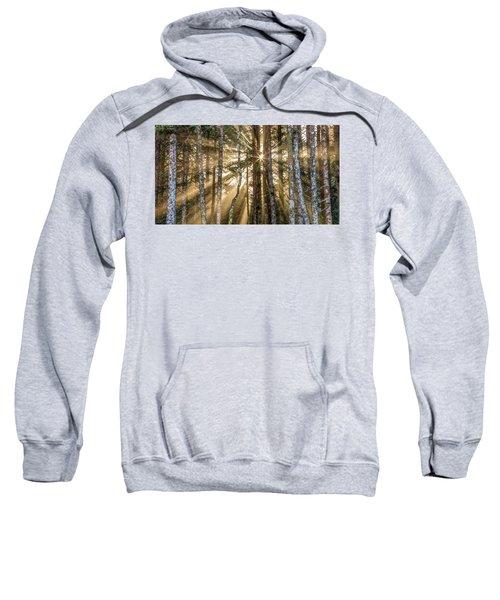 Sunshine Forest Sweatshirt