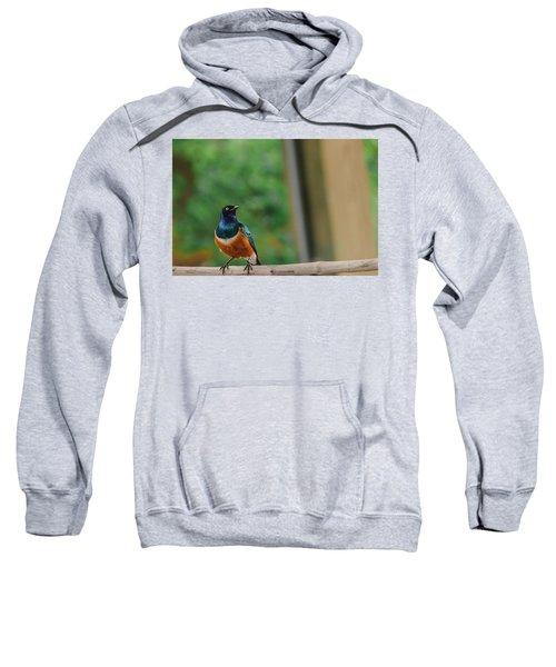 Superb Starling Sweatshirt