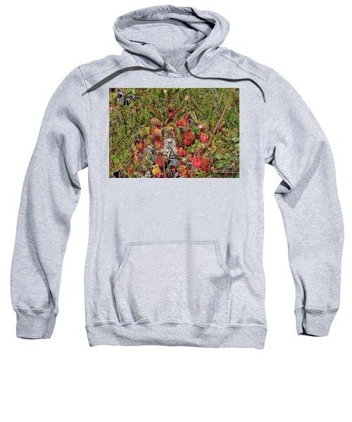 The Bog Sweatshirt