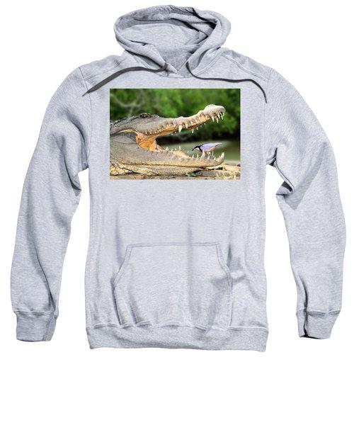 The Crocodile Bird Sweatshirt