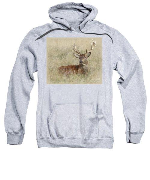 The Gentle Stag Sweatshirt