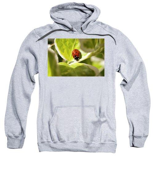 The Ladybug  Sweatshirt