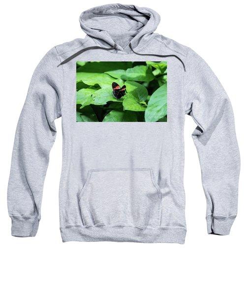The Leaf Is My Plate Sweatshirt