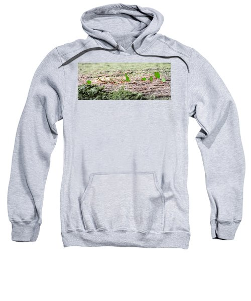 The Leaf Parade  Sweatshirt