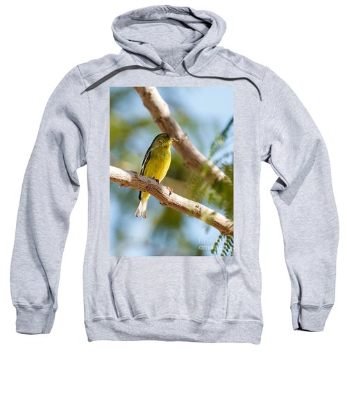 The Lesser Goldfinch Sweatshirt