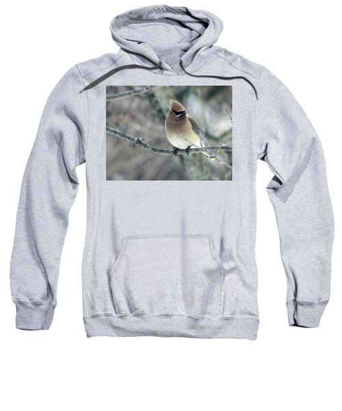 The Masked Cedar Waxwing Sweatshirt