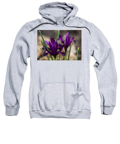 The Rise Of The Early Royal Dwarf Iris Sweatshirt