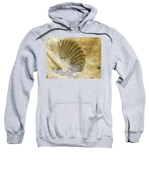 The Shell Fossil Sweatshirt