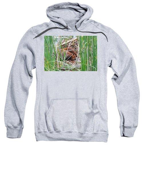 The Sleeping Beavers Sweatshirt