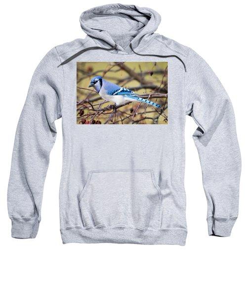 The Winter Blue Jay  Sweatshirt by Ricky L Jones