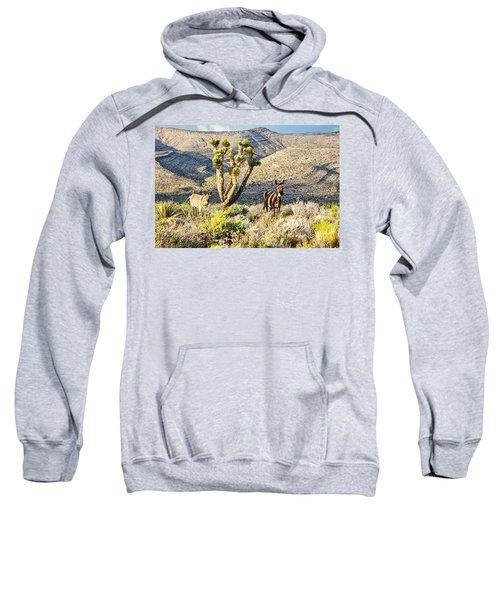 The Zebra Burro Sweatshirt