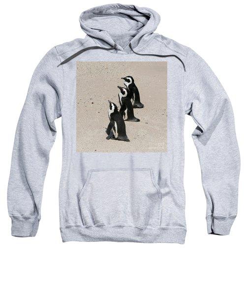 Three African Penguins Sweatshirt