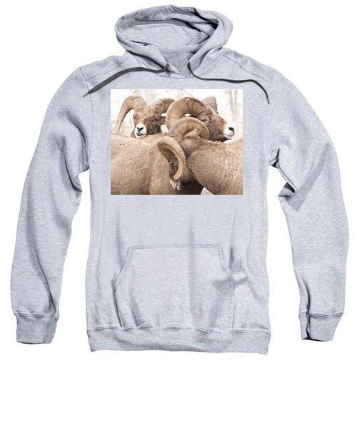 Three Bighorn Rams Sweatshirt