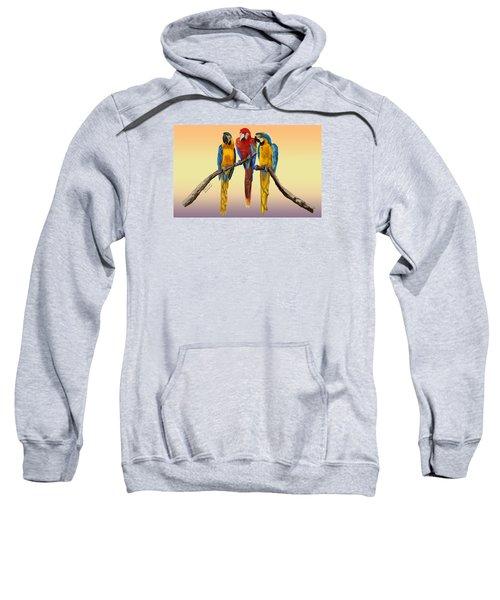 Three Macaws Hanging Out Sweatshirt