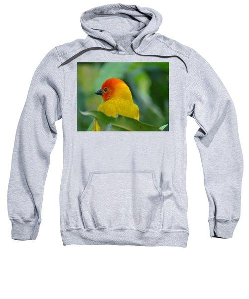 Through A Child's Eyes - Close Up Yellow And Orange Bird 2 Sweatshirt by Exploramum Exploramum