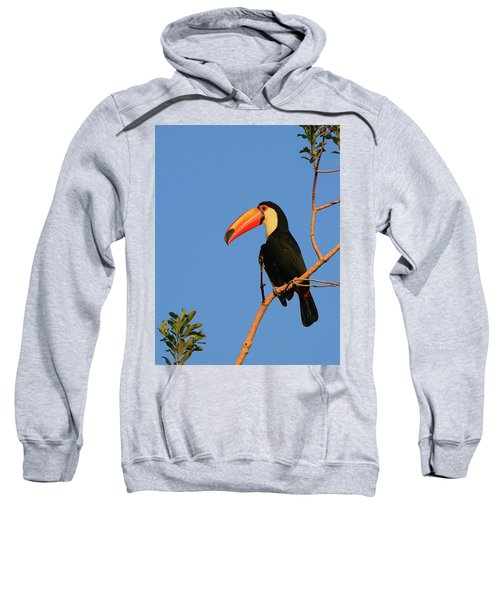 Toco Toucan Sweatshirt by Bruce J Robinson