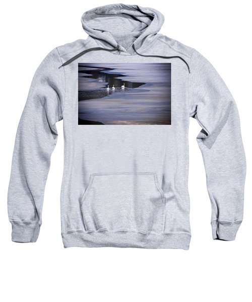 Tourist Swans Sweatshirt