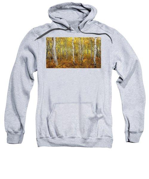 Transition Sweatshirt