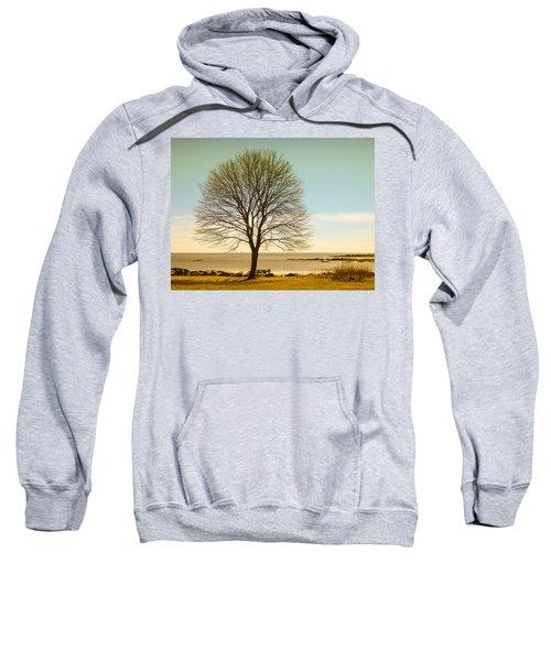 Tree At New Castle Common Sweatshirt