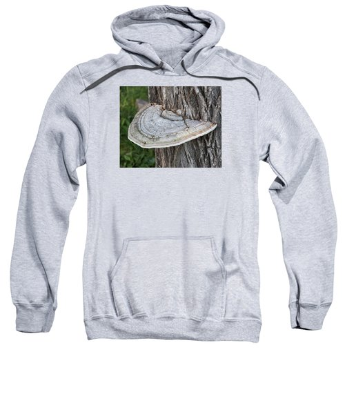 Tree Fungus Sweatshirt