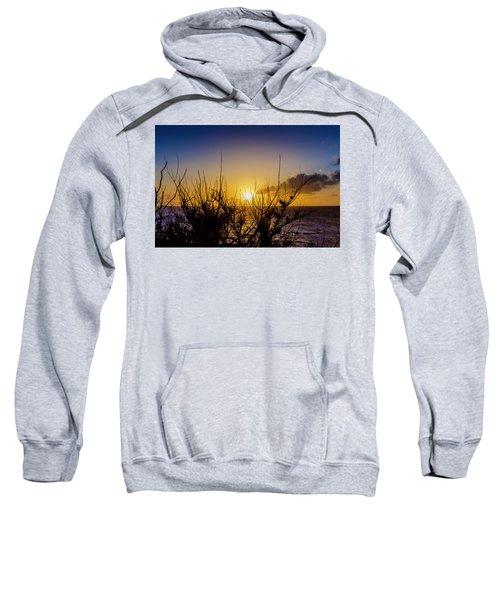 Tree Sunset Sweatshirt
