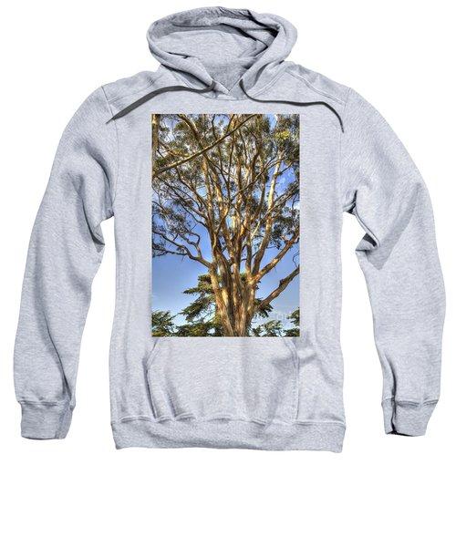 Tree To The Heavens Sweatshirt