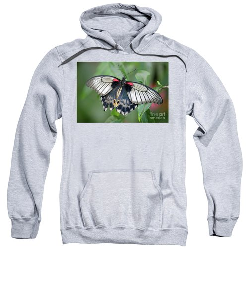 Tropical Butterfly Sweatshirt