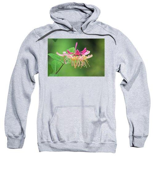 Trumpet Honeysuckle Sweatshirt