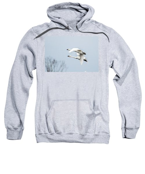 Tundra Swan Lift-off Sweatshirt
