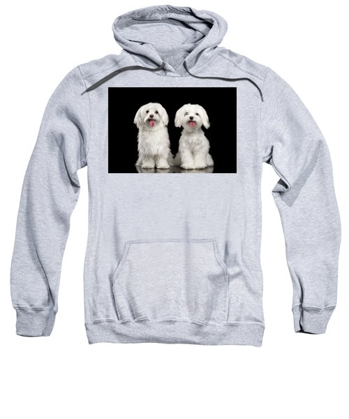 Two Happy White Maltese Dogs Sitting, Looking In Camera Isolated Sweatshirt