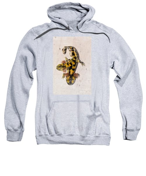 Two-headed Near Eastern Fire Salamande Sweatshirt by Shay Levy