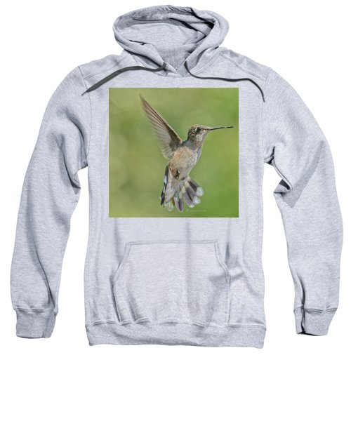 Untitled Hum_bird_four Sweatshirt