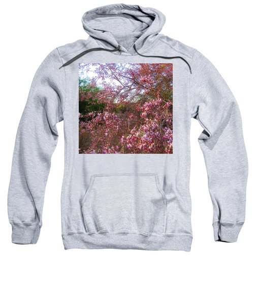 Vekol Wash Desert Ironwood In Bloom Sweatshirt