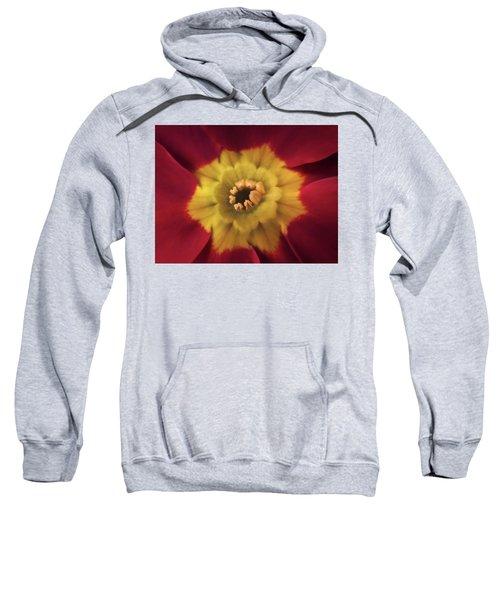 Velvet Crush Sweatshirt